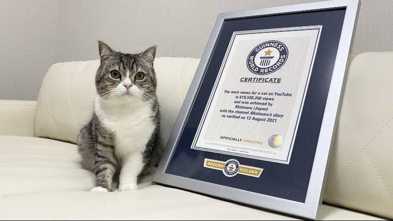 """喵!2年内狂吸6亿点阅 世界纪录认证""""YT最受欢迎的猫"""""""